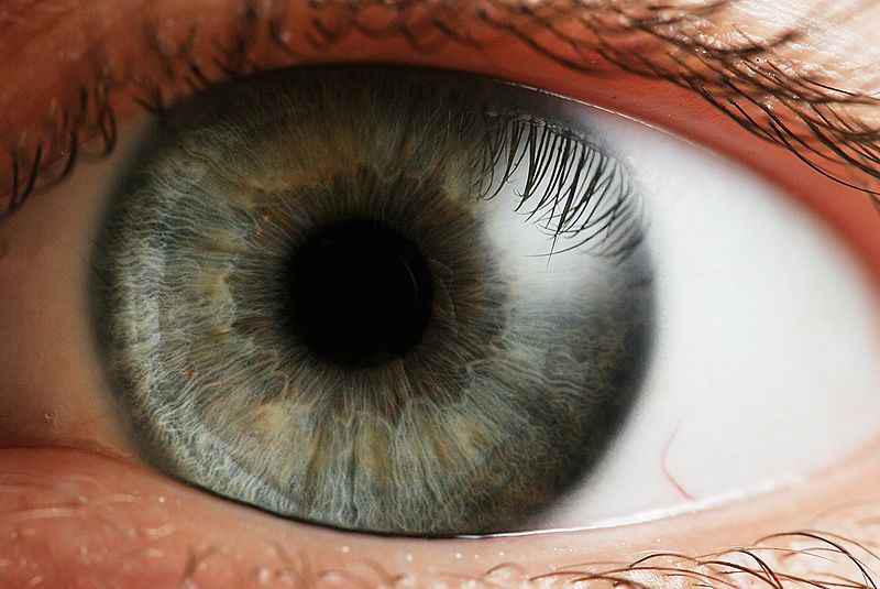 szem színe