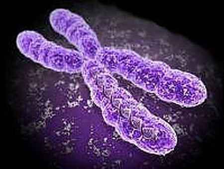 x-kromoszóma